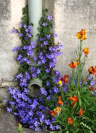 wall flowers wall flowers yarnstorm press