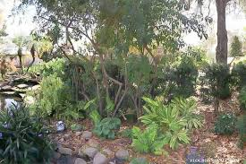 how to plant a florida friendly landscape savewater flour on my