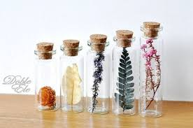 Preserve Flowers How To Preserve And Arrange The Dried Flowers Flower Care Guide