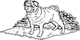printable pug awesome pug drawing coloring pug puppy pdf
