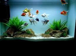 best 25 goldfish tank ideas on amazing fish tanks