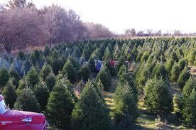 nordstrom s tree farm omaha ne