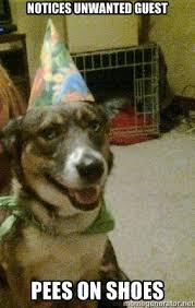 Unwanted Guest Meme - good party guest dog merdarce