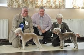 bedlington terrier stud bedlington terrier crufts 11