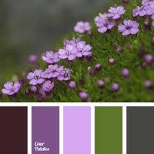 shades of purple color shades of purple color color palette ideas
