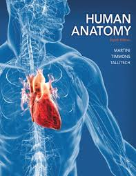human anatomy amazon co uk frederic h martini robert b