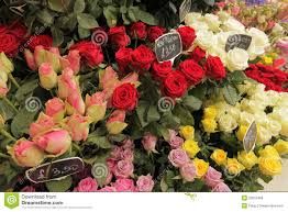 Blue Roses For Sale Roses For Sale Royalty Free Stock Images Image 33015469