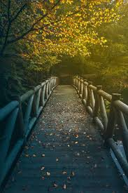 Wall Mural Mystical Pathway Peel 145 Best Diy Wall Murals Images On Pinterest Landscapes