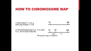 Genetic Map Linked Genes And Chromosome Mapping Youtube