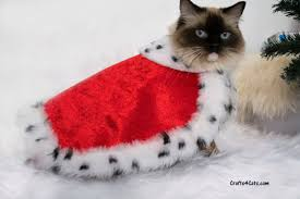 cat costume royal cat costume royal velvet cloak costume for cats with