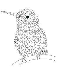 bird coloring pages for toddlers birds coloring pages nofrackingway info