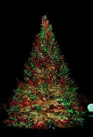 bigtree hang lights in outdoor trees
