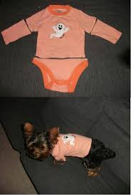 Halloween T Shirts For Dogs by 24 Best Rad Dog Clothing Images On Pinterest Dog Clothing Dog