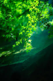 Green Color 68 Best Green Images On Pinterest Beautiful Places