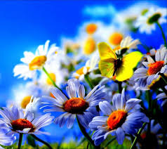 flower wallpaper for mobile phone mobile phone wallpapers download