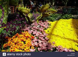 Botanical Gardens In Las Vegas Flowers In Conservatory Botanical Gardens Bellagio Las Vegas