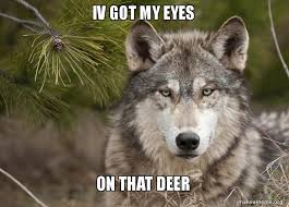 Wolf Memes - iv got my eyes on that deer grey wolf memes make a meme
