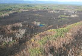 Alaska Wildfires Map by Landscape Effects Of Fire Frequency And Severity On Boreal Alaskan