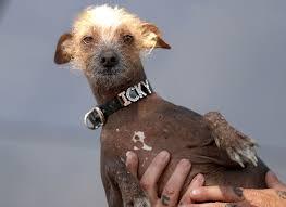 Ugliest Ugly Dog Contest Winner 2017