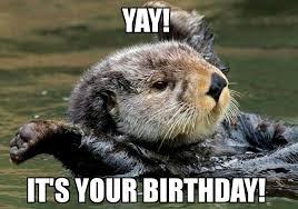 Sea Otter Meme - sea otter birthday birthday pinterest otters