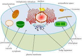diagram of eukaryotic cell complete wiring diagram