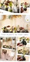 Indoor Container Gardening - 63 best urban gardening images on pinterest plants gardening
