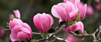 types of plant annuals biennials perennials shrubs bulbs