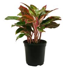 home plants 48 in indoor plants garden plants u0026 flowers the home depot