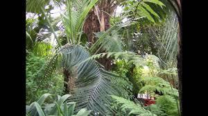 Botanic Garden Belfast by Botanic Gardens Belfast Youtube