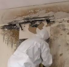 Getting Rid Of Mold In Basement by Indoor Mold Wikipedia