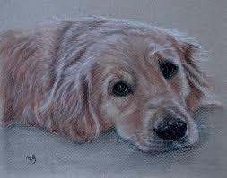custom dog drawing from picture custom pet drawing custom