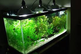 aquarium lighting basics the case for led fixtures