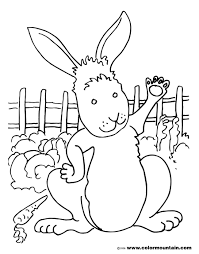 rabbit carrot coloring pages