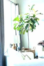 sunlight l for plants best indoor plants low light no sunlight plants a indoor plants low