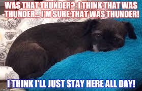 Stay In Bed Meme - scared of thunder scared dog scaredy cat rain puppy afraid
