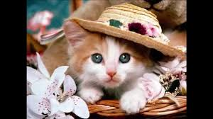 50 pictures of the most cute cats and kittens youtube