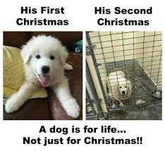 Christmas Dog Meme - dopl3r com memes his first christmas his second christmas a dog