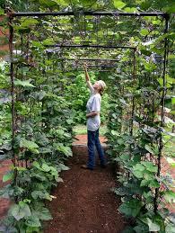 amazing vertical gardening ideas bean trellis vegetable