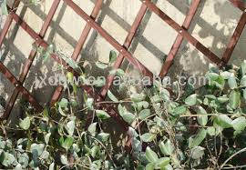 expanding trellis fencing 90x180cm natural wood expanding trellis for garden buy wood