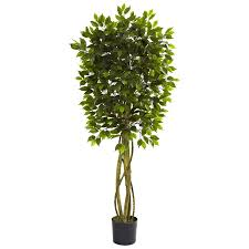 darby home co ficus tree in pot reviews wayfair