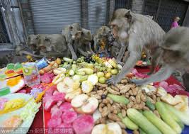 monkeys their thanksgiving in thailand 1 chinadaily cn
