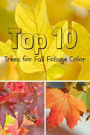 10 trees fall foliage color gardening u0027s blog