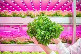 philips led grow light philips lighting brings the solution of horticulture leds to pma s