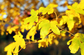colors close to yellow free images nature branch sunlight flower color autumn