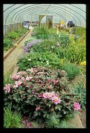 20 february 2014 kent alpine gardener u0027s diary gardeners