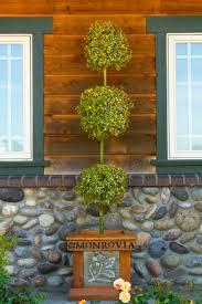 Eugenia Topiary Lemon Swirl Australian Brush Cherry Monrovia Lemon Swirl