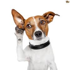 why do dogs hear better than we do
