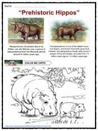 hippopotamus facts worksheets u0026 information for kids
