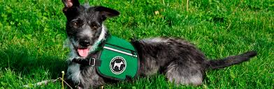 How To Get A Comfort Dog Dogs For Better Lives Hearing Autism U0026 Program Dogs