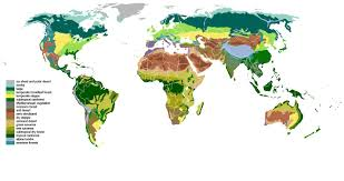 Dominant Plants Of The Tropical Rainforest - plant ecology wikiwand